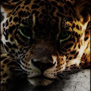 Poza de profil pentru ExcEEd
